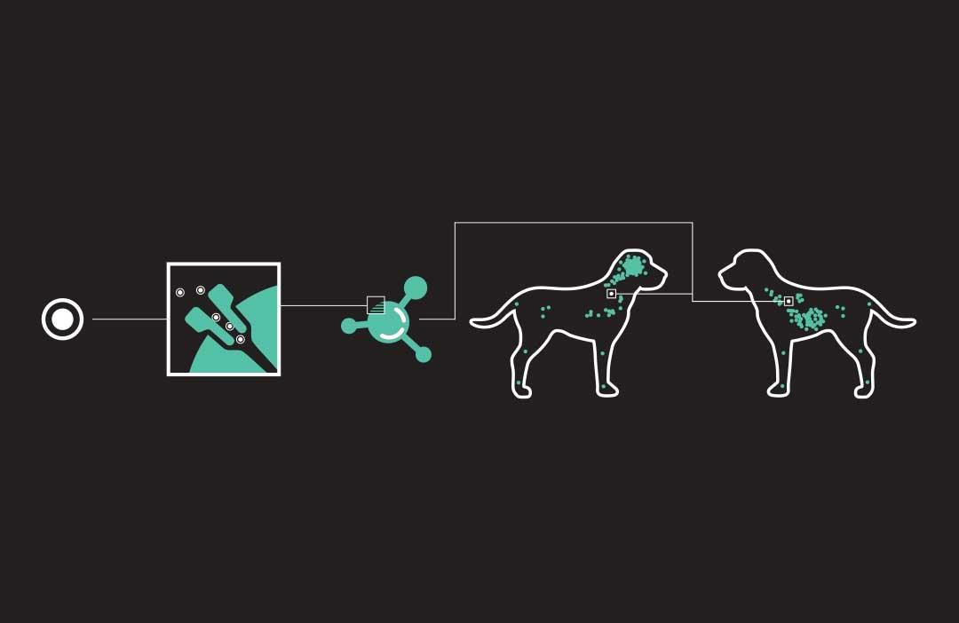 CBD receptors in dogs