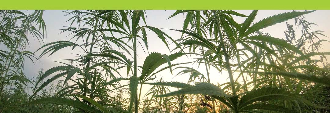 Learn About CBD