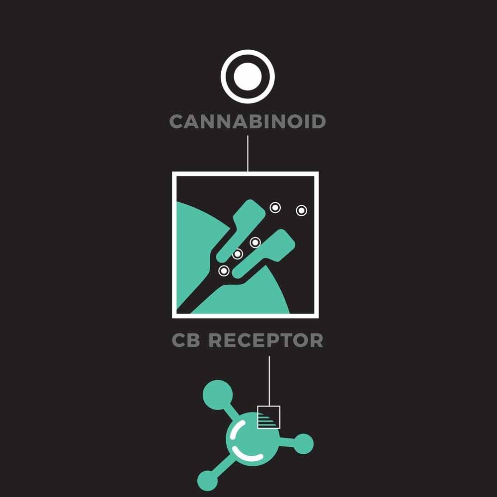 Cannabinoids 2