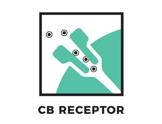 CB Receptor Diagram
